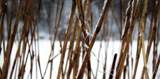 Снег солома