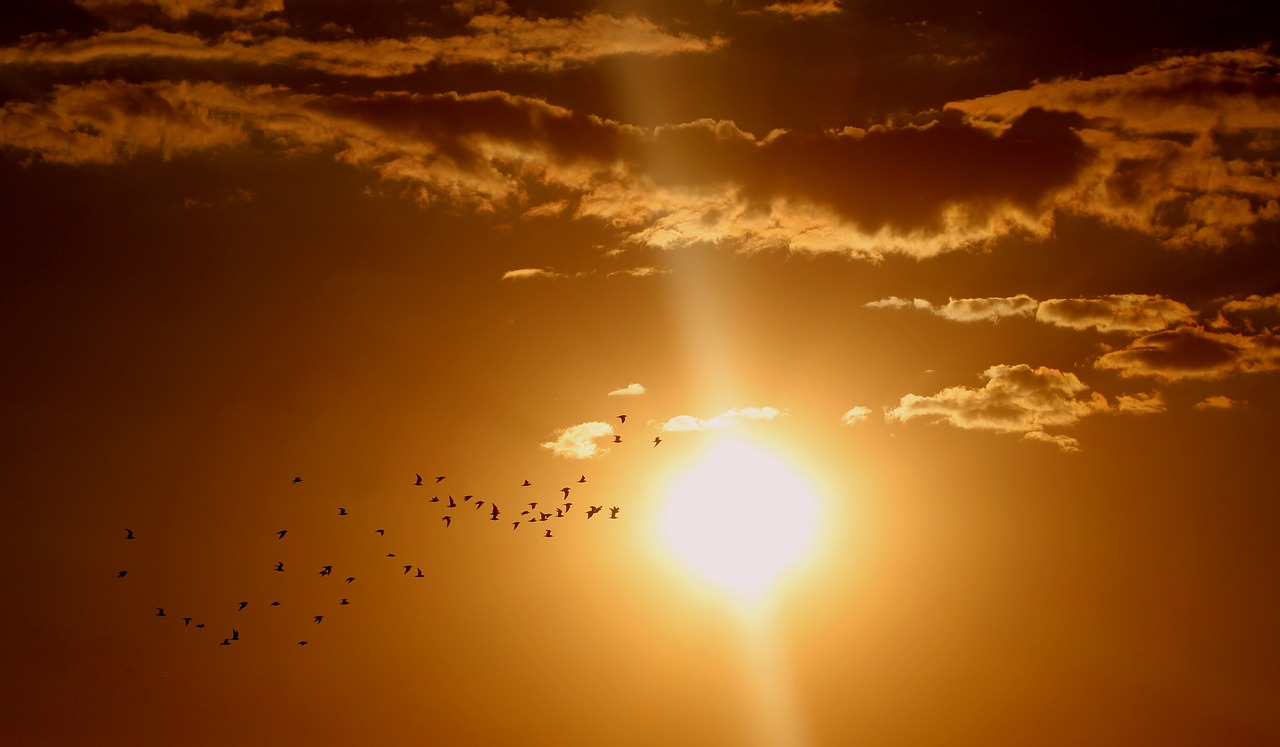 Солнце. Брагин в Бюро Постышева
