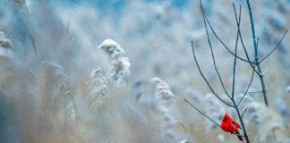 Бюро Постышева. Зима