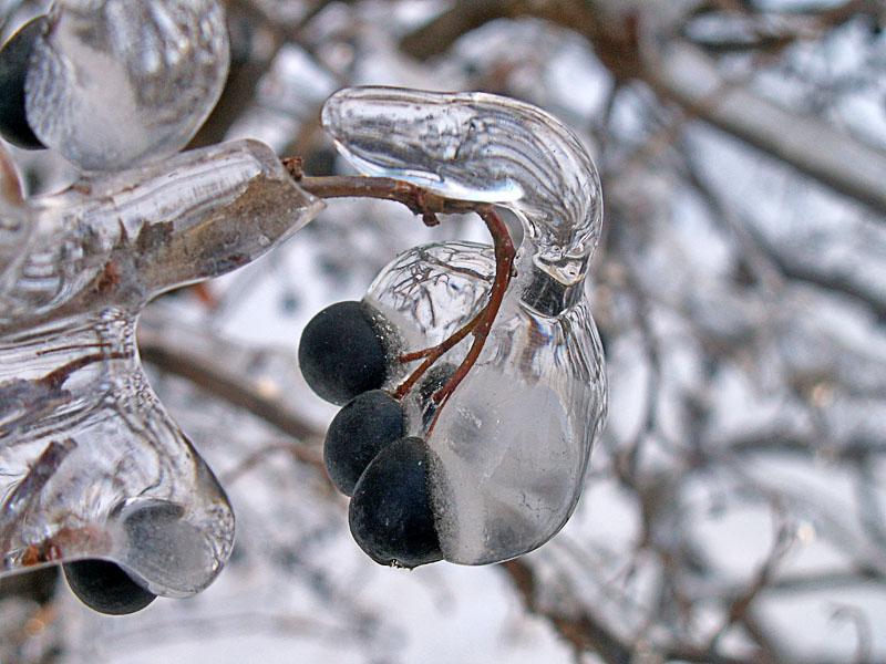 Ягоды во льду