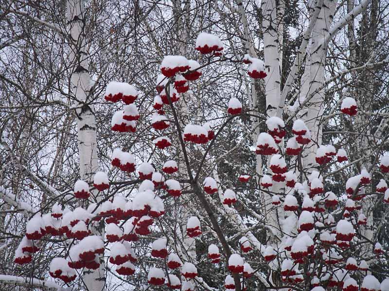 Снежное украшение