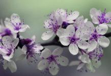 Сад с любовью