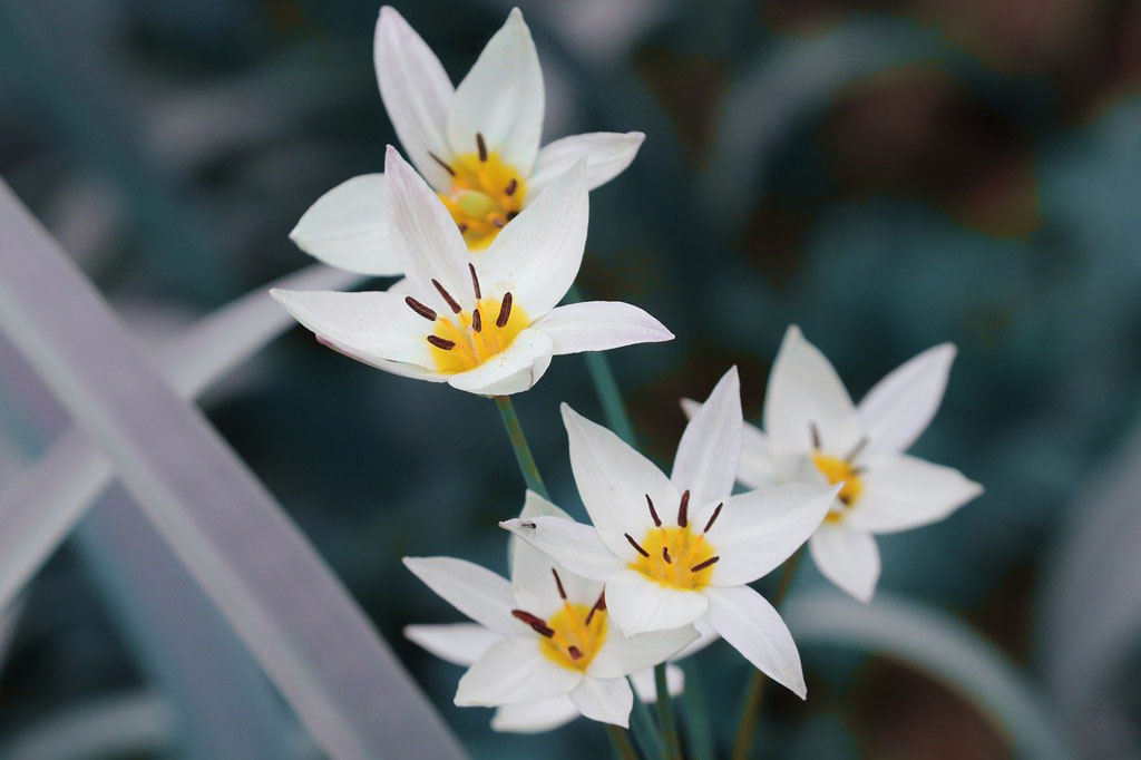 Память-цветы